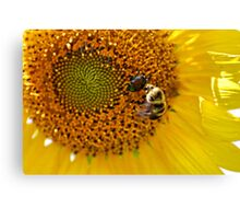 Get Out Of Here Beetle! Canvas Print