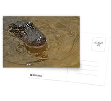 Young Alligator, As Is Postcards