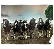 Six Working Clydesdales - Gippsland,Victoria Poster
