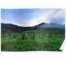 Foggy Vineyards  •  Highway 29  •  Calisotga, California Poster