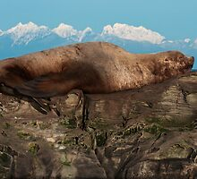 Sea Lion on the Rocks by toby snelgrove  IPA