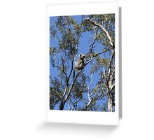 Raymond Island Koala Greeting Card