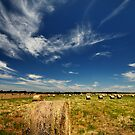 Grass Bales @ Geelong by Ray Yang