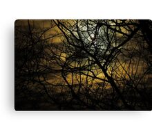 Willow In Moonlight Canvas Print