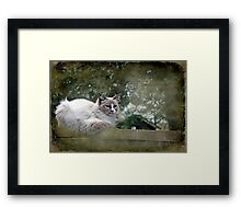 """& as they watched him ,JimBob snuggled down "" Framed Print"