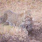 Leopard and Cub masai mara Kenya by Sue Earnshaw