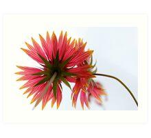 Upward Bloom Art Print