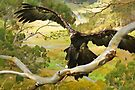 On The Wings of An Eagle by Trudi's Images