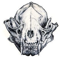 Raccoon Skull by egokick