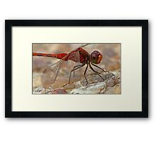 Unshaved Blushing Dragonfly Framed Print