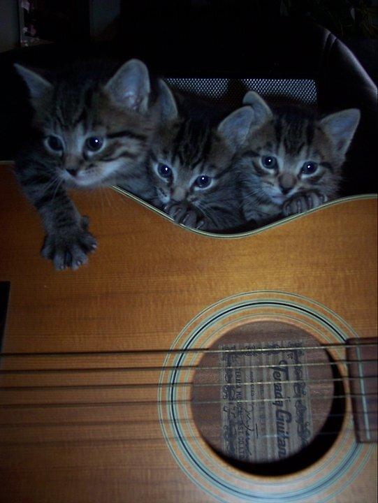 3 Little Kittens by seemyshots