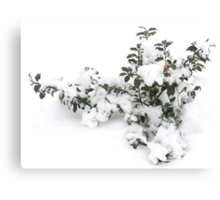 Winter Holly Canvas Print