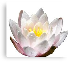 Shining Water Lily Canvas Print