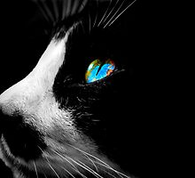 Black Tuxedo cat with Blue eyes by GarethWilton