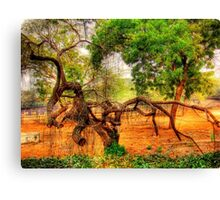 An Old Tree in National Zoo(Delhi) Canvas Print