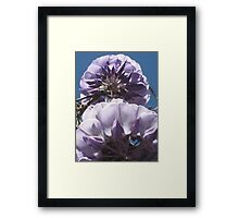 The Famous Wistaria of Sierra Madre Framed Print