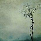 Tree of Life by Anne Staub