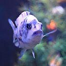 One Fish, Blue Fish by SuddenJim