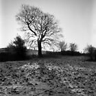Tree, Waseley Hills Park by Matthew Walters