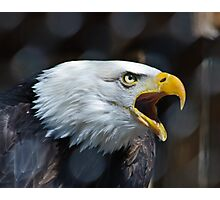 Screaming Bald Eagle Photographic Print