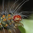 Caterpillar close-up by Etwin