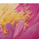 peony up close by ANNABEL   S. ALENTON