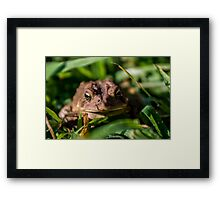 Toad In The Grass Framed Print