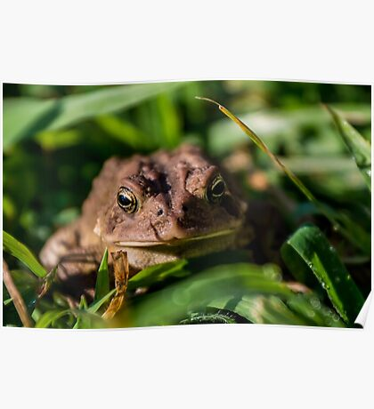 Toad In The Grass Poster