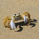 Sand Crab by Alberto  DeJesus