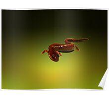 Four Toed Salamander  Poster