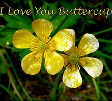 I Love You Buttercup by Lucinda Walter