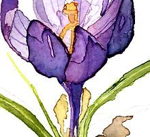 One Crocus by Carol Kroll