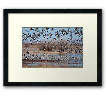Three D Sandhill Cranes  Framed Print