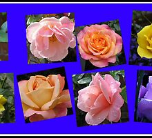 Roses of Many Colours Collage by BlueMoonRose