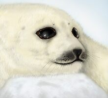 Harp Seal - Digital Painting by SimonMeehan