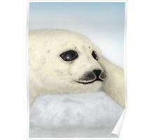 Harp Seal - Digital Painting Poster