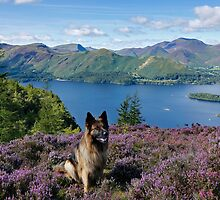 A walk through the heather on Walla Crag Derwentwater English Lake District by Martin Lawrence