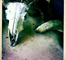 Rams Skull by Marita
