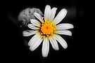 Daisy and Flower by RebeccaBlackman