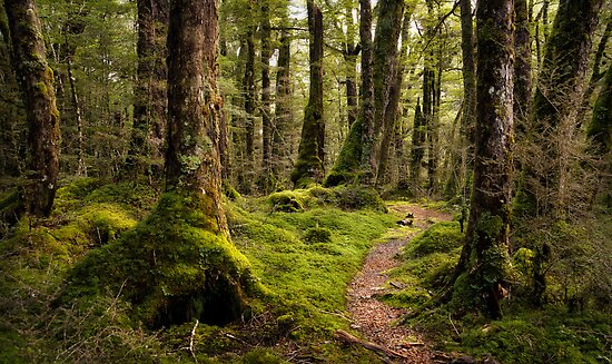 The Forest Path - Fiordland National Park by Dean Mullin