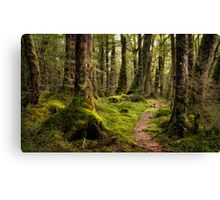 The Forest Path - Fiordland National Park Canvas Print