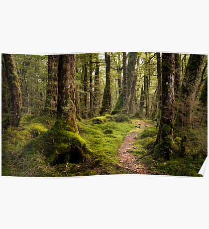 The Forest Path - Fiordland National Park Poster