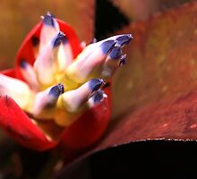 Bromeliad bloom by ♥⊱ B. Randi Bailey