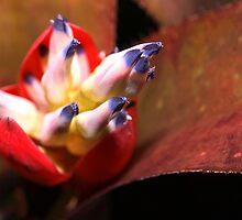 Bromeliad bloom by ♥⊱ B. Randi Bailey