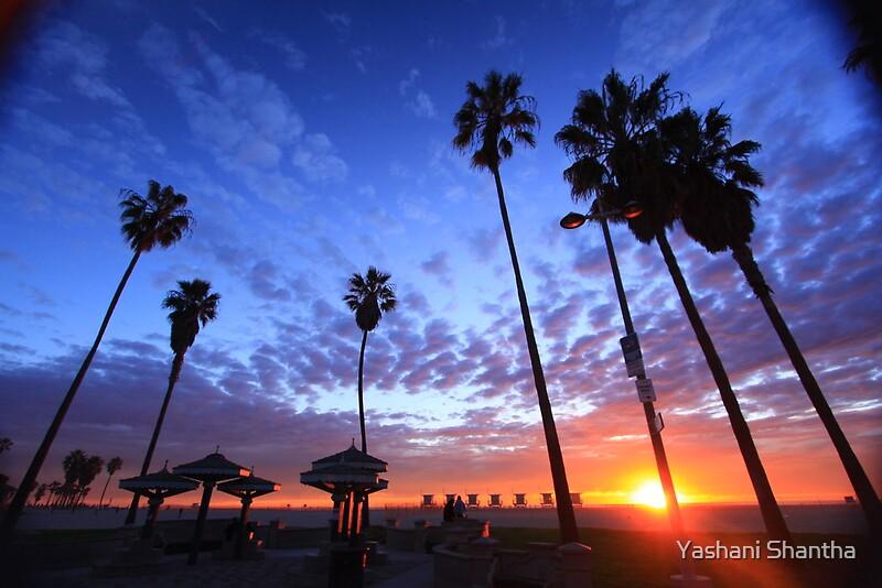 Quot Venice Beach Sunset Quot By Yashani Shantha Redbubble
