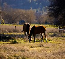 Dos Caballos by Howard Lorenz