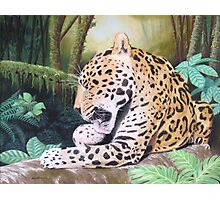 Pristine - Jaguar Photographic Print