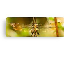 Glistening Wings Canvas Print
