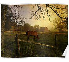Rural State of Mind - Morning Light Poster