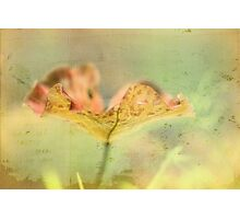 Faded Water Leaf - JUSTART ©  Photographic Print